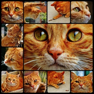 Mackerel Cuddly Red Cute Cat Sweet Collage Tiger
